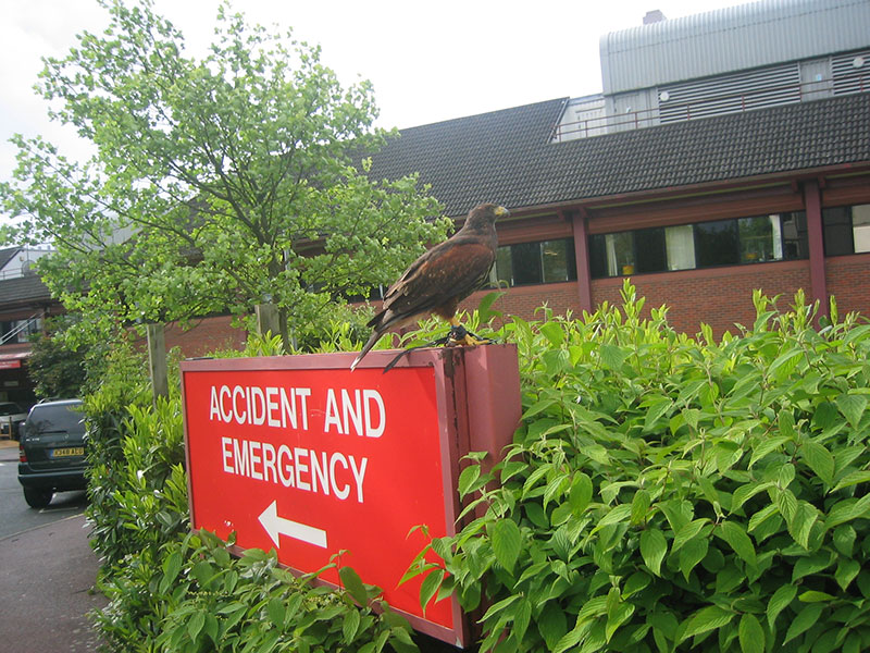 Nuisance birds at hospitals