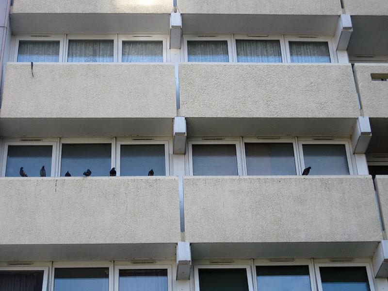 Nuisance birds on a housing estate