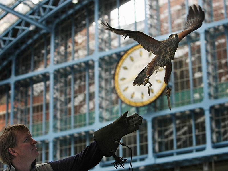 Hawk flying at a train station